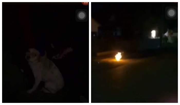 Violență împotriva animalelor dusă la extrem! Mai mulți minori din Buzău au incendiat un câine, din