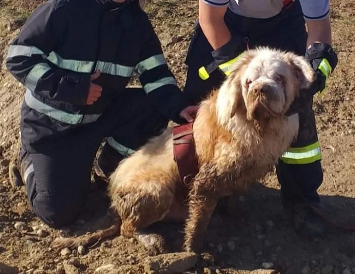 """Cum au salvat pompierii din Giurgiu un câine orb, de la înec! """"A fost o misiune inedită"""" /  FOTO"""