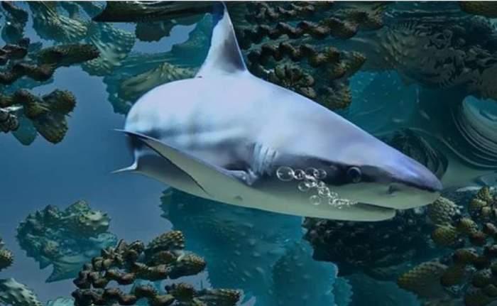 Care a fost reacția părinților când și-au văzut fetița salvând rechinul