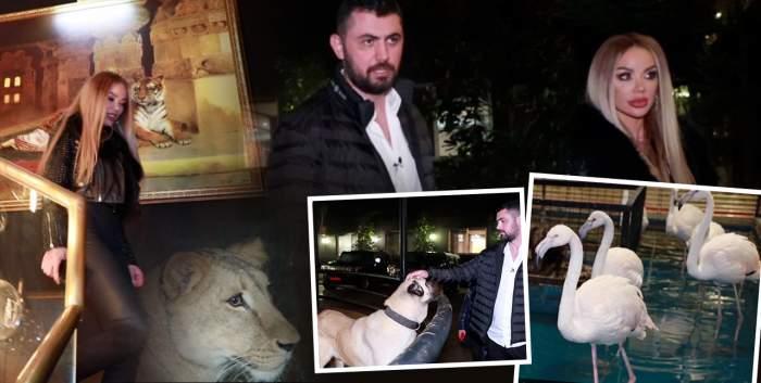Imagini exclusive! Am filmat leul, rechinul și păsările flamingo din casa milionarului Biancăi Drăgușanu!
