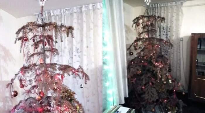 """Doi frați din Alba au în casă un brad natural de Cartea Recordurilor! Cei doi îl țin împodobit de 14 ani: """"La noi e în permanență Crăciun"""" / FOTO"""
