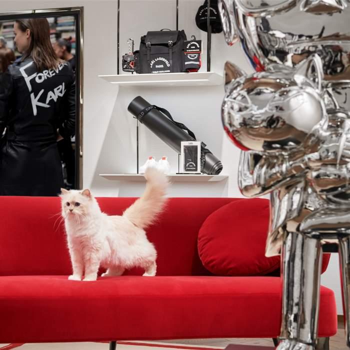 Ce s-a ales de pisica lui Karl Lagerfeld, la un de an de când vedeta i-a lăsat o mare parte din avere