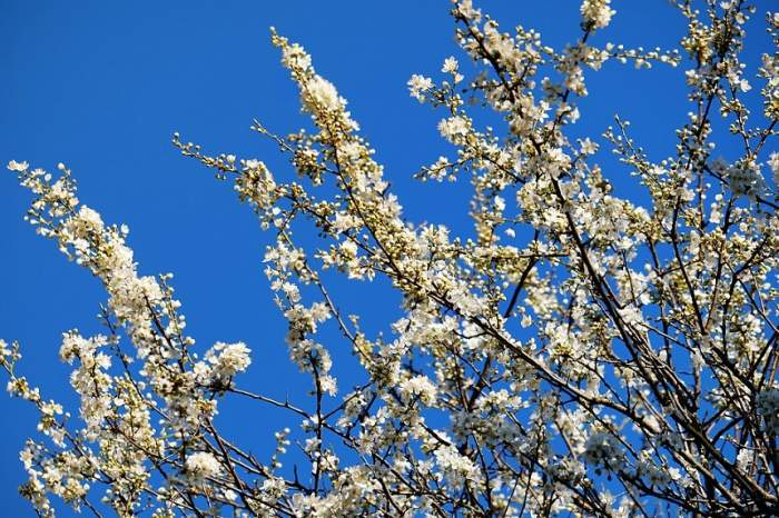 Primăvara revine cu forțe proaspete. De când vom avea parte de vreme mult mai călduroasă