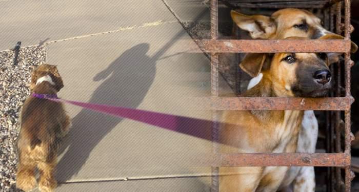 EXCLUSIV / Animale nevinovate, victime colaterale în criza declanșată de COVID-19 / Detalii scandaloase