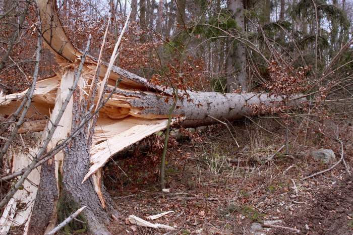 Femeie rănită în Capitală, după ce un copac a căzut peste ea, din cauza vântului! Arborele a avariat și o mașină parcată pe trotuar