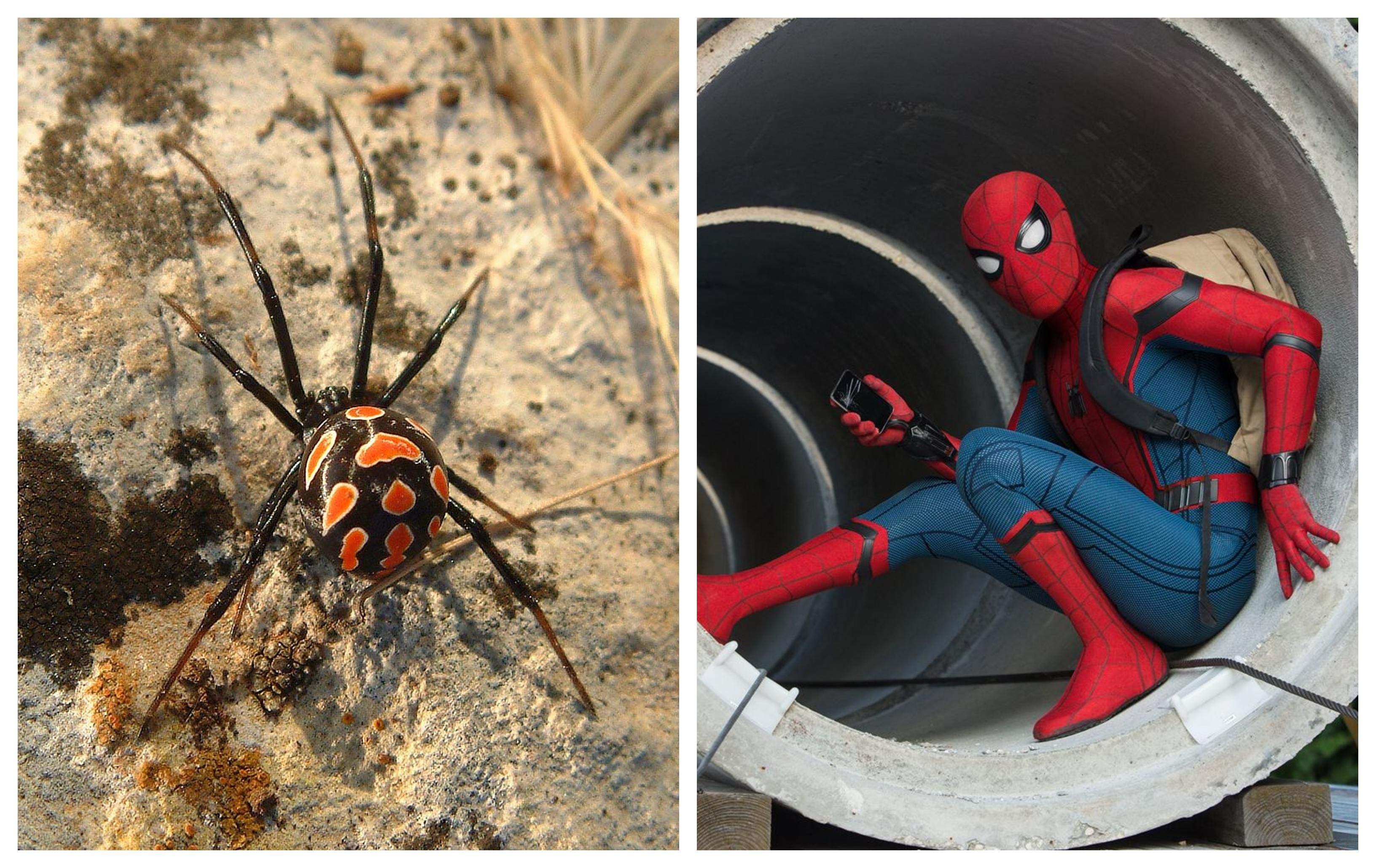 uimitorul link- ul unic de păianjen