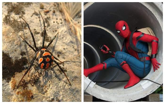 """Trei frați din Bolivia s-au lăsat mușcați de un păianjen """"Văduva neagră""""! Copiii sperau să devină super-eroi la fel ca Spider-Man"""