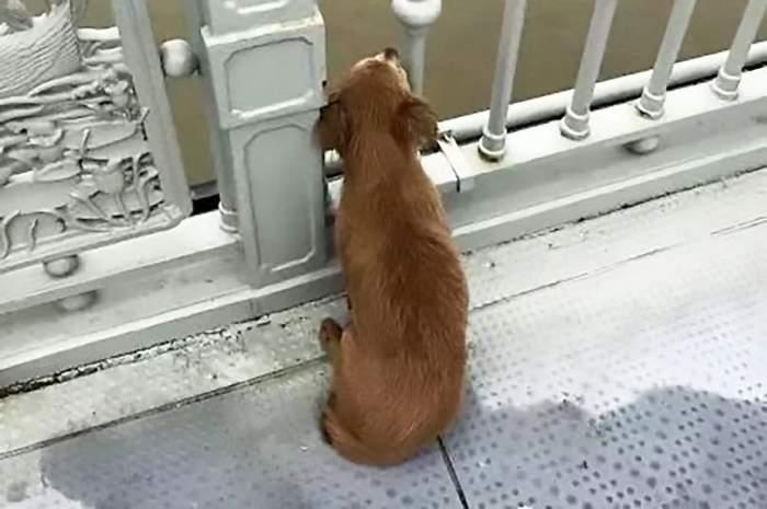 FOTO / Povestea emoționantă a unui câine din China care și-a așteptat zile în șir stăpânul! Proprietarul animalului s-a sinucis, aruncându-se pe de un pod