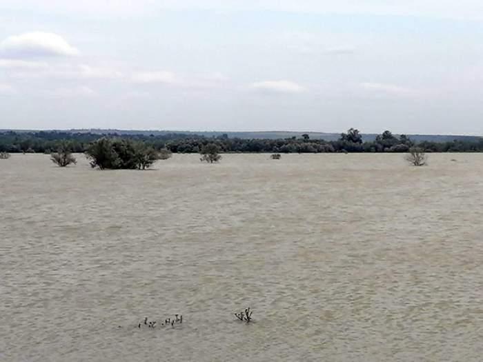 Un cioban a fost găsit înecat în Prut. Vasluianul a intrat în apă cu tot cu cal și căruță