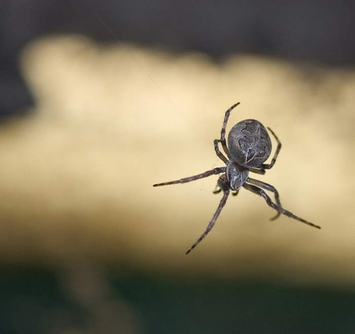 Româncă din Italia, moartă după ce a fost mușcată de un păianjen periculos! Ce au spus medicii!