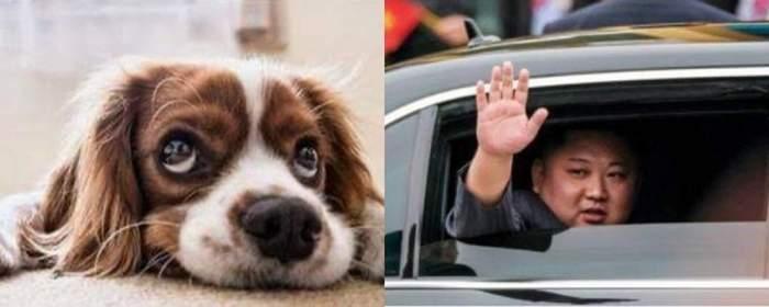 Câinii vor fi interziși în Coreea de Nord! Motivul revoltător oferit de liderul dictator Kim Jong-Un