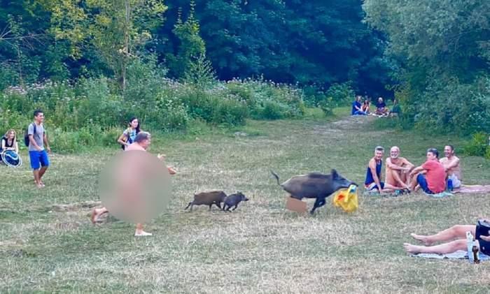 Un bărbat dezbrăcat a luat la alergat porcul mistreț care i-a furat laptopul
