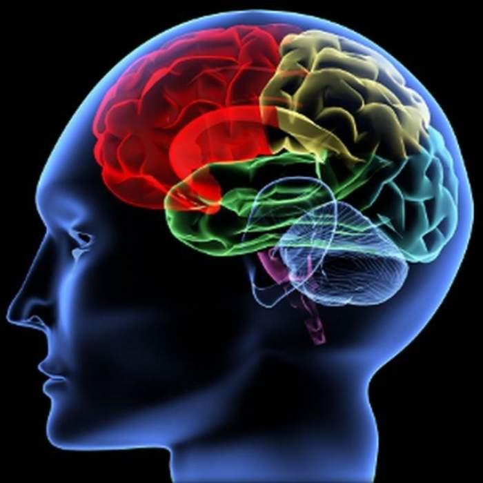 Imagine ce ilustrează părțile creierului uman