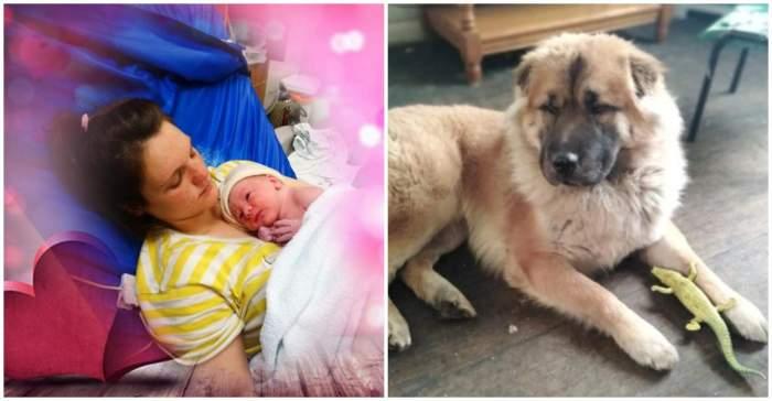Bebeluş de doar 12 zile, sfâşiat de câinele familiei, în Anglia. Părinţii copilului vor fi judecaţi pentru neglijență