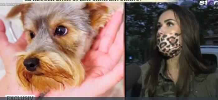 """Ce recompensă oferă Oana Zăvoranu persoanei care îi găsește animalul de companie. Bruneta suspină după Ozzy: """"Umblăm pe străzi de atunci"""" / VIDEO"""