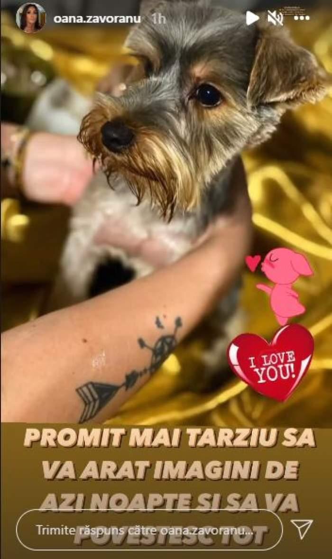 Oana Zăvoranu și-a găsit animalul de companie! Căutările au durat mai bine de 12 ore / FOTO