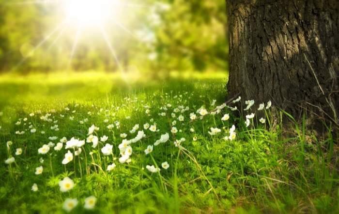 flori afara in iarba
