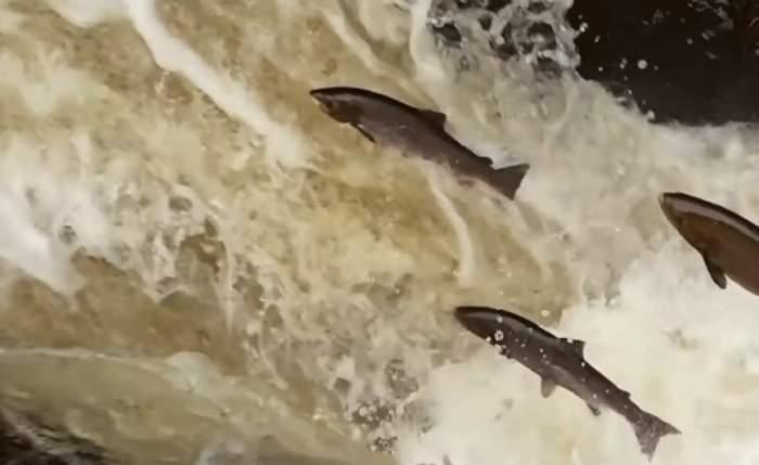 """Este sau nu sănătos consumul de pește? Explicația medicului nutriționist Mihaela Bilic: """"Grozăvii spuse pe un ton serios"""""""