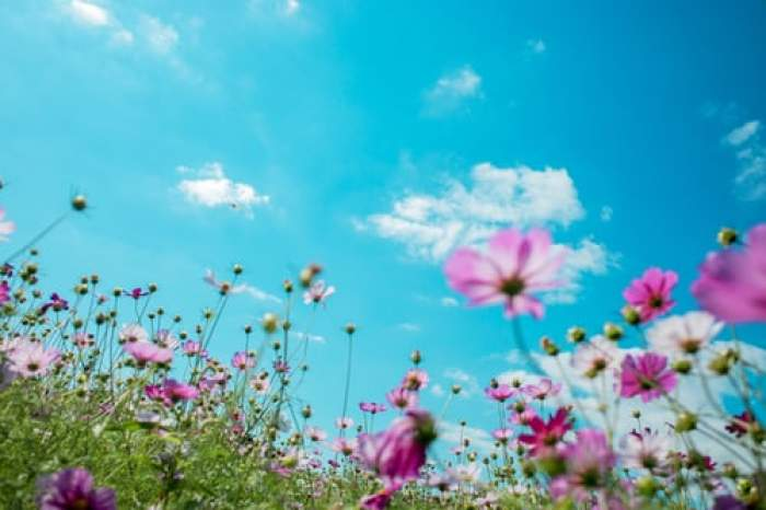 flori pe câmpie