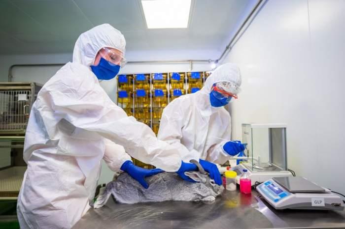 A apărut primul vaccin anti-COVID pentru animale! Carnivac-Cov oferă imunitate pentru șase luni