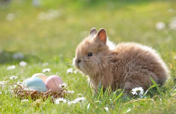 Un iepure pe o poiană lângă un coș cu ouă colorate