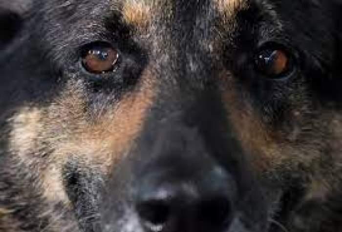 Moment istoric în Anglia. Legea britanică va recunoaște animalele drept ființe cu drepturi!