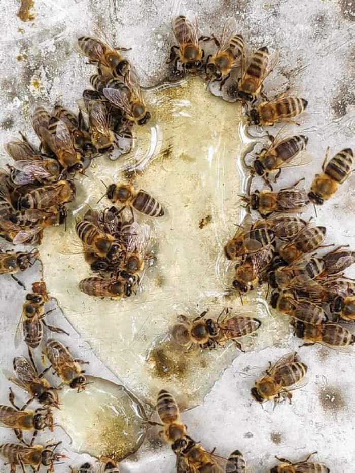 Patronul unui lanț de patiserii din Vrancea, mort după ce a fost înțepat de albine. Bărbatul învăța apicultură