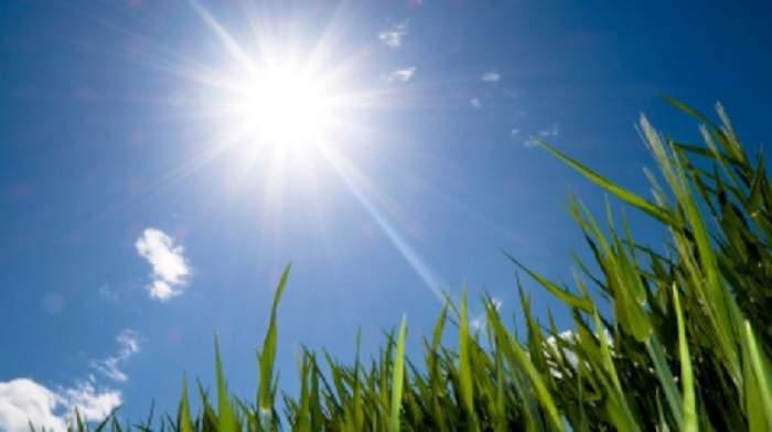 iarba cu soare