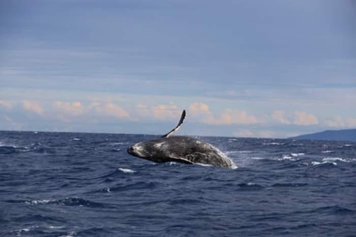 """Scafandrul care s-a salvat după ce a fost înghițit de o balenă. Bărbatul a trăit să povestească: """"Mi-am zis, asta e, voi muri"""""""