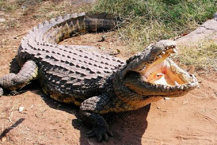 """O tânără din Marea Britanie și-a salvat sora geamănă din colții unui crocodil. Cum a reușit: """"L-am bătut"""""""