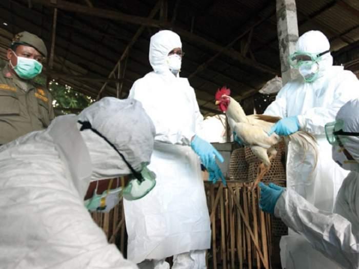 Ce este gripa aviară H10N3. Primul caz la om, raportat în China