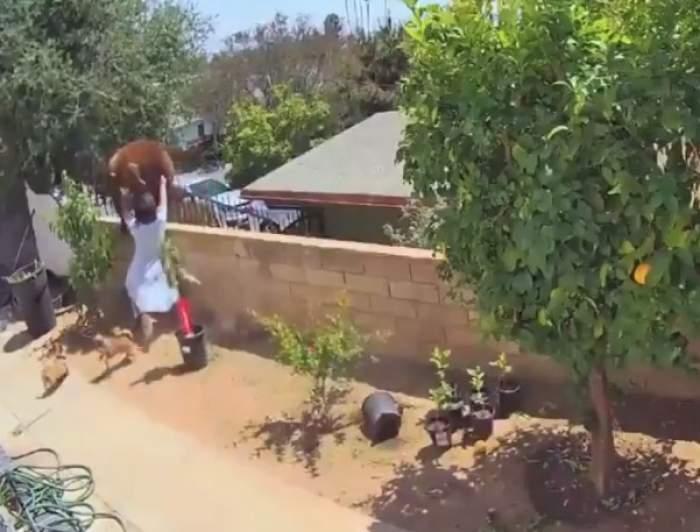 O adolescentă s-a luptat cu o ursoaică