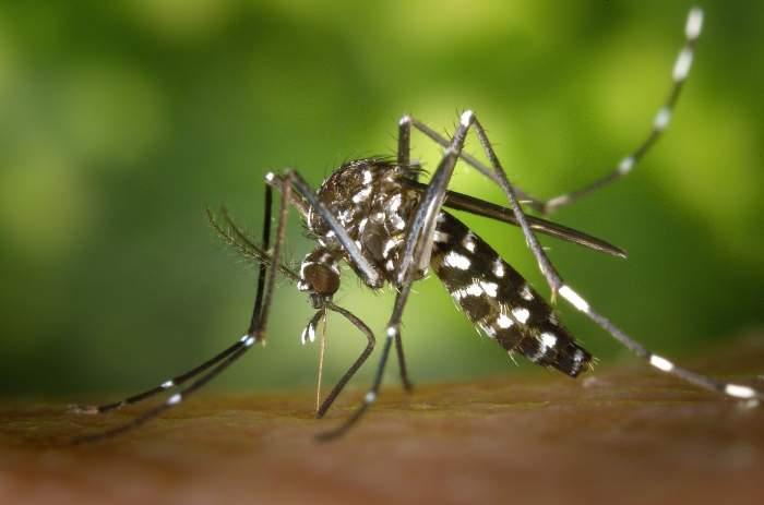 Cele mai bune remedii pentru înțepăturile de țânțari. Cum scapi rapid de mâncărimi și iritație