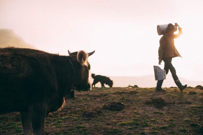 Ce conține laptele de vacă și cât este de sănătos, de fapt