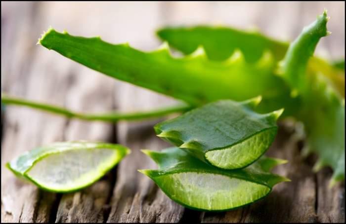 Aloe Vera, plantă vindecătoare - îngrijire și proprietăți