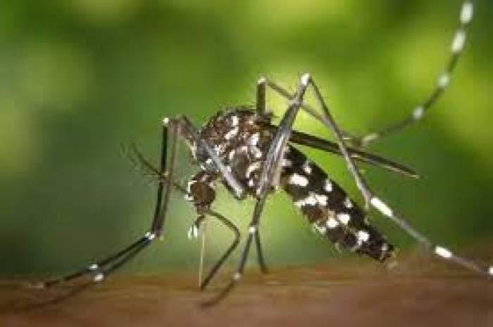 Un țânțar