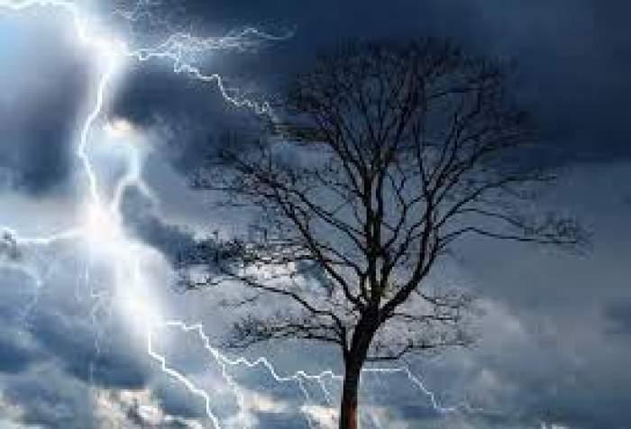 Un copac și cerul plin de nori