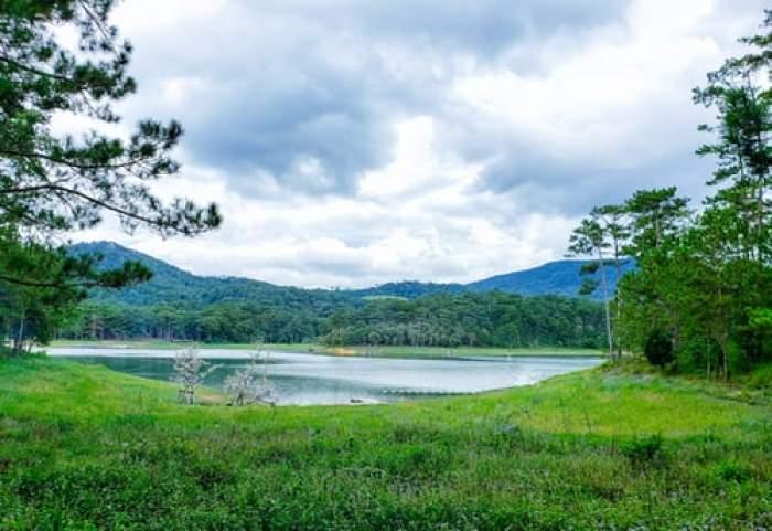 lac și verdeață