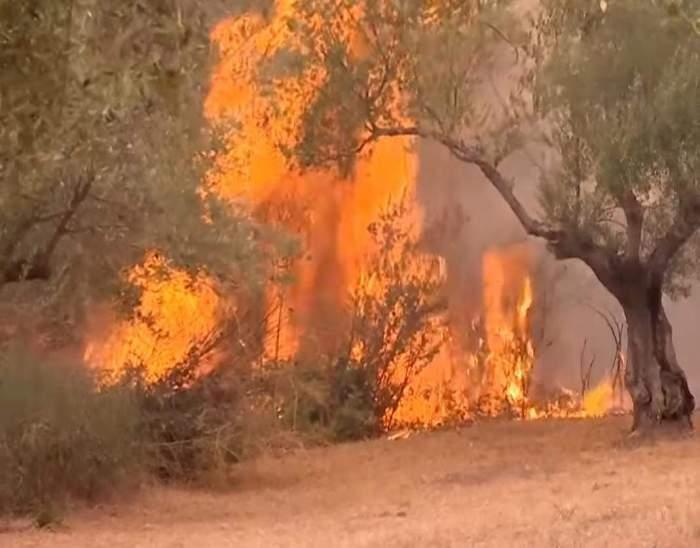 Grecii rămași pe drumuri în urma incendiilor de vegetație vor primi daune. Bugetul de familie se ridică și la 150.000 de euro