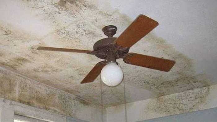 mucegai pe tavan