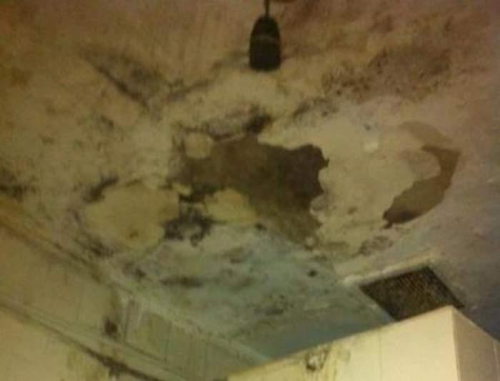 Ce se întâmplă dacă ai mucegai în casă. Cum apare și care sunt pericolele