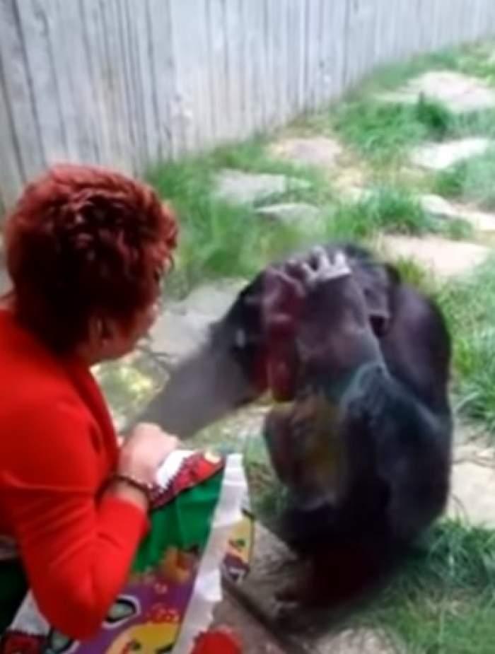 """Cine este femeia care s-a îndrăgostit de un cimpanzeu. Grădina zoologică i-a interzis să-l mai viziteze: """"Și el mă iubește"""" / VIDEO"""