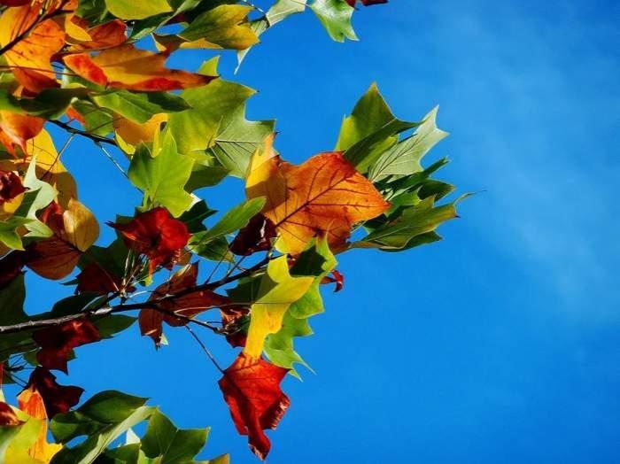 Frunze de toamnă pe cerul albastru