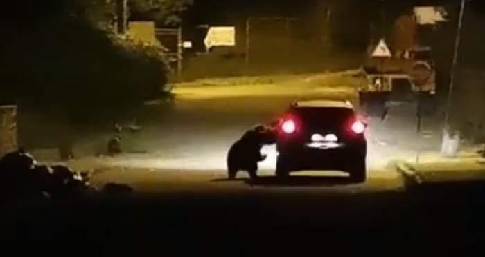 O ursoaciă aleargă o mașină