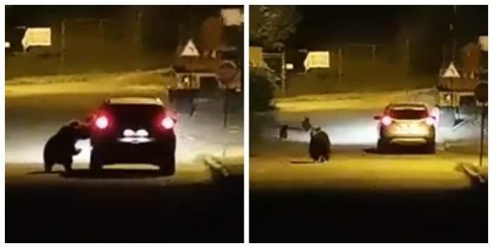 Colaj foto cu ursul care atacă mașina