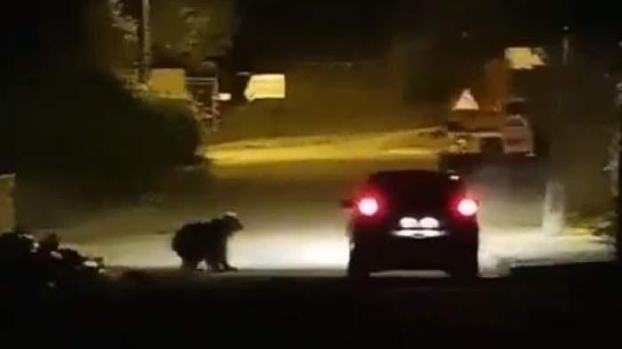 O ursoacă lângă o mașină