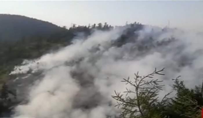 pâdure în flăcări