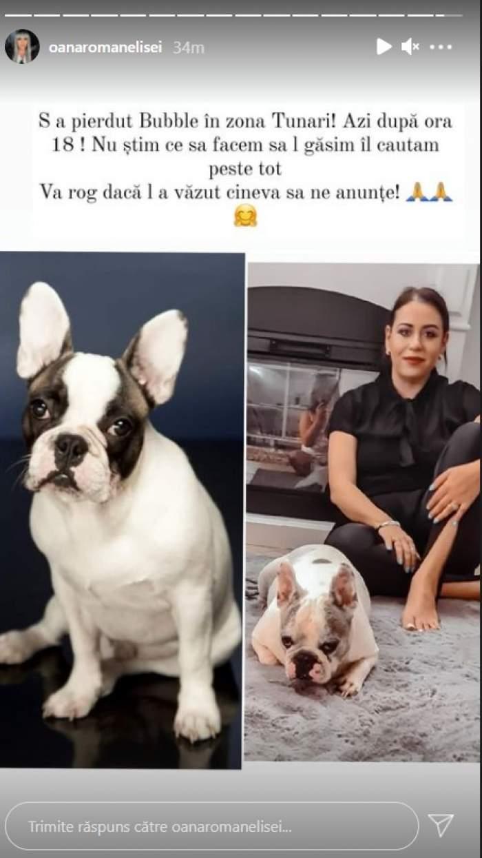 """Oana Roman și-a pierdut câinele! Vedeta cere ajutorul tuturor: """"Nu știm ce să facem"""""""