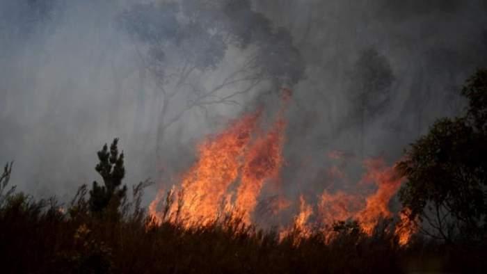 """Autoritățile din Atena sunt din ce în ce mai îngrijorate din cauza incendiilor violente de vegetație. Avertismentul primit de către locuitori: """"Nu ieșiți din casă și..."""""""