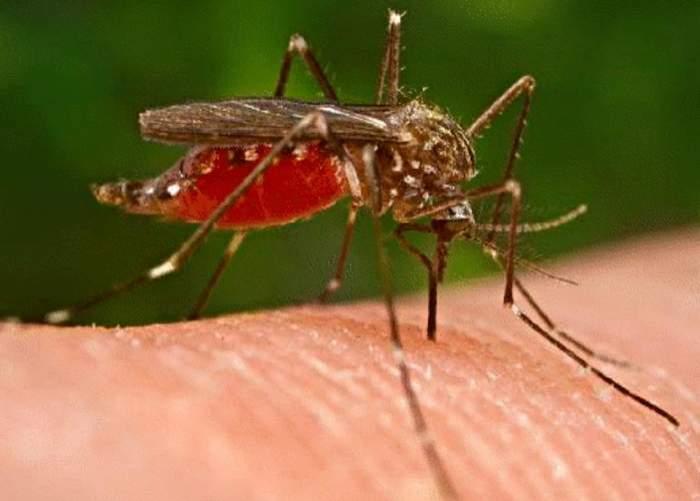 Primul caz de infectare cu virusul West Nile din România, în acest an